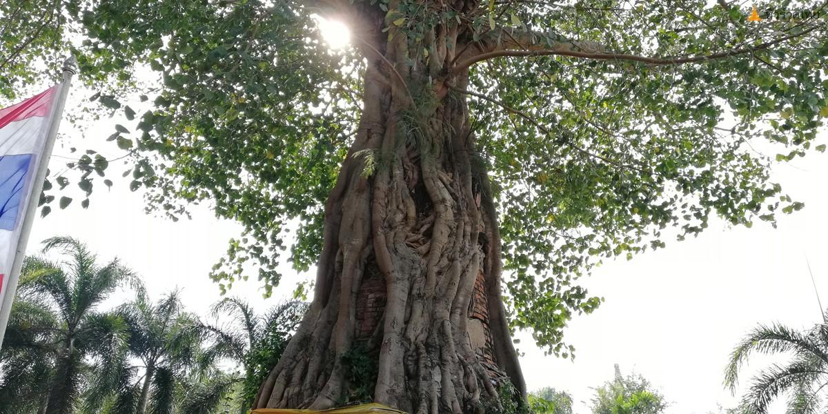 WatNaphrameru-Ayutthaya-42