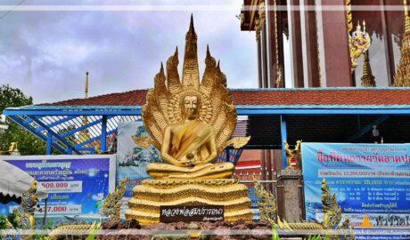 ไอ้ไข่เด็กวัดเจดีย์@วัดลาดปลาเค้า Wat Lat Pla Khao